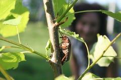 Los insectos del diseño pueden Fotografía de archivo libre de regalías