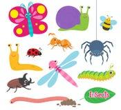 Los insectos son pequeños animales Fotografía de archivo libre de regalías
