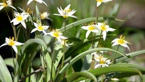 Los insectos vuelan sobre las flores en la primavera almacen de video