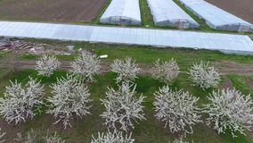 Los invernaderos ven desde arriba Invernaderos largos para las verduras almacen de metraje de vídeo