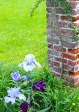 Los iris azules y púrpuras florecen en este jardín al lado de un poste del ladrillo fotos de archivo