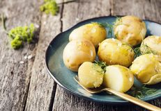 Los jóvenes hirvieron las patatas con eneldo y aceite de oliva Fotos de archivo libres de regalías