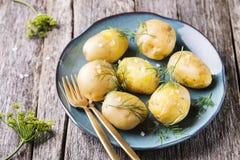 Los jóvenes hirvieron las patatas con eneldo y aceite de oliva Fotografía de archivo libre de regalías