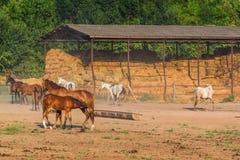 Los jóvenes paren cuidado por la yegua en granja del rancho del caballo Imagenes de archivo