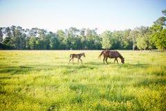 Los jóvenes paren y sirven de madre al caballo Fotos de archivo libres de regalías