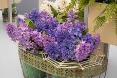 Los jacintos multicolores del corte en los floreros envueltos en la corteza de madera en un invernadero en un jardín botánico Foto de archivo