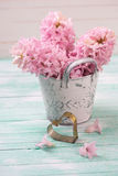 Los jacintos rosados frescos florecen en cubo y corazón decorativo encendido Foto de archivo libre de regalías