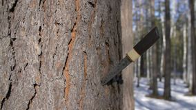 Los japoneses tradicionales ponen en cortocircuito la espada o el tanto en el árbol, enfoque almacen de video