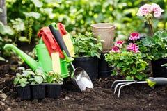 Los jardineros dan el establecimiento de las flores en el jardín, cierre encima de la foto foto de archivo libre de regalías