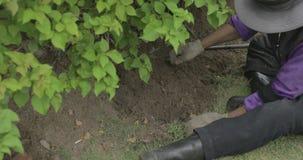 Los jardineros están sentando empuje la tierra y el traspaleo almacen de video