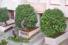 Los jardineros profesionales en uniforman arbustos del corte en la calle fotos de archivo