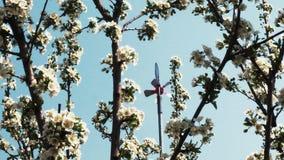 Los jardines de la primavera est?n floreciendo Ramifique con las flores almacen de video