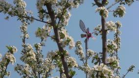 Los jardines de la primavera est?n floreciendo Ramifique con las flores almacen de metraje de vídeo