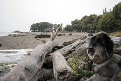 Los jardines de oro explotan los árboles Fotografía de archivo