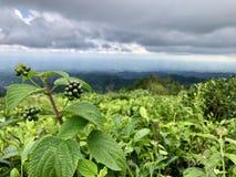 Los jardines de té se ven desde arriba de la colina en Keminung en Karanganyar en Java central, Indonesia foto de archivo libre de regalías