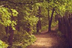 Los jardines del paisaje adyacente al bosque Imagen de archivo