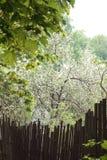 Los jardines del paisaje adyacente al bosque Imagen de archivo libre de regalías