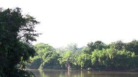 Los jardines pac?ficos con una escena, un agua, ?rboles, arbustos y un viento del lago afectaron a las hojas almacen de video