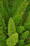 Los jardines verdes hermosos de los helechos cultivan un huerto imágenes de archivo libres de regalías