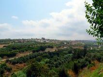 Los jardines verdes olivas magníficos de Creta fotos de archivo