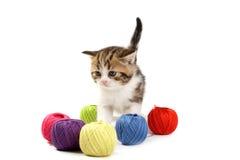 Los juegos del gatito Imágenes de archivo libres de regalías