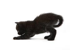 Los juegos del gatito del negro Fotografía de archivo libre de regalías