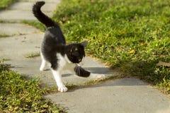 Los juegos del gatito en el aire abierto Imagen de archivo