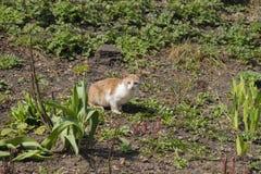 Los juegos del gatito entre una hierba Fotografía de archivo libre de regalías