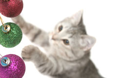 Los juegos del gato del gris Fotos de archivo libres de regalías