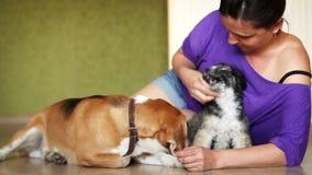 Los juegos femeninos jovenes con dos perros preciosos en el hogar laminan el piso metrajes