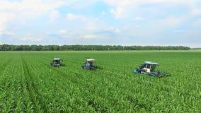 Los lanzamientos jovenes del maíz en el campo en filas, una granja para el maíz creciente, tractores de la agricultura analizan,