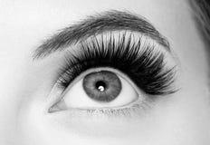 Los latigazos del ojo, mujer de la extensión del latigazo azotan cierre encima del monocromo macro imagen de archivo