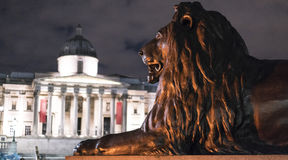 Los leones famosos en Trafalgar Square Londres en la noche Imagenes de archivo