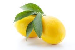 Los limones con las hojas aislaron Fotos de archivo