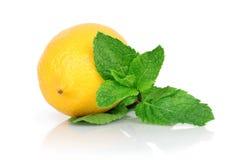 Los limones frescos con verde de la hoja acuñan, en el fondo blanco Fotos de archivo