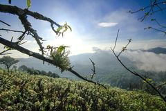 Los liquenes en las ramas reflejan con luz del sol fotos de archivo