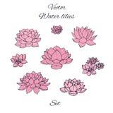 Los lirios de agua dibujados mano del rosa del vector fijaron aislado en el fondo blanco Imágenes de archivo libres de regalías