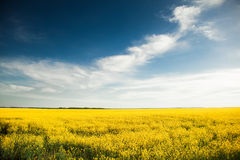 Los lookes del campo les gusta la bandera ucraniana fotografía de archivo