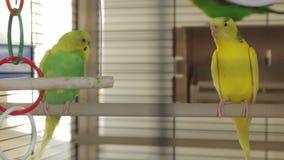Los loros del verde amarillo