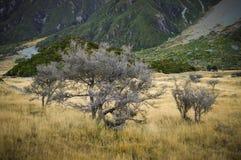 Los lugares del paraíso en Nueva Zelanda del sur/soporte cocinan a National Park Fotografía de archivo