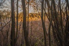 Los máximos de lámina salvajes del glyceria de los sweetgrass hicieron excursionismo igualando el sol Imagen de archivo