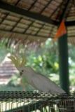los macaws Fotografía de archivo libre de regalías