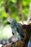 los macaws Imagen de archivo