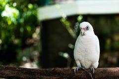 los macaws Imágenes de archivo libres de regalías
