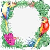 Los Macaws repiten mecánicamente la naturaleza exótica del verano de los pájaros alrededor del arte gráfico de vector del marco ilustración del vector