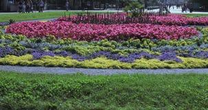 Los macizos de flores y los árboles con los arbustos en la ciudad parquean almacen de metraje de vídeo