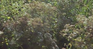 Los macizos de flores y los árboles con los arbustos en la ciudad parquean almacen de video