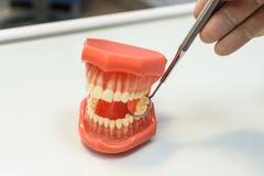 Los mandíbulas y el dentista de las herramientas Foto de archivo