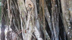 Los mangles se cierran para arriba almacen de video