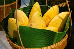 Los mangos maduros amarillos en la cesta imagen de archivo libre de regalías